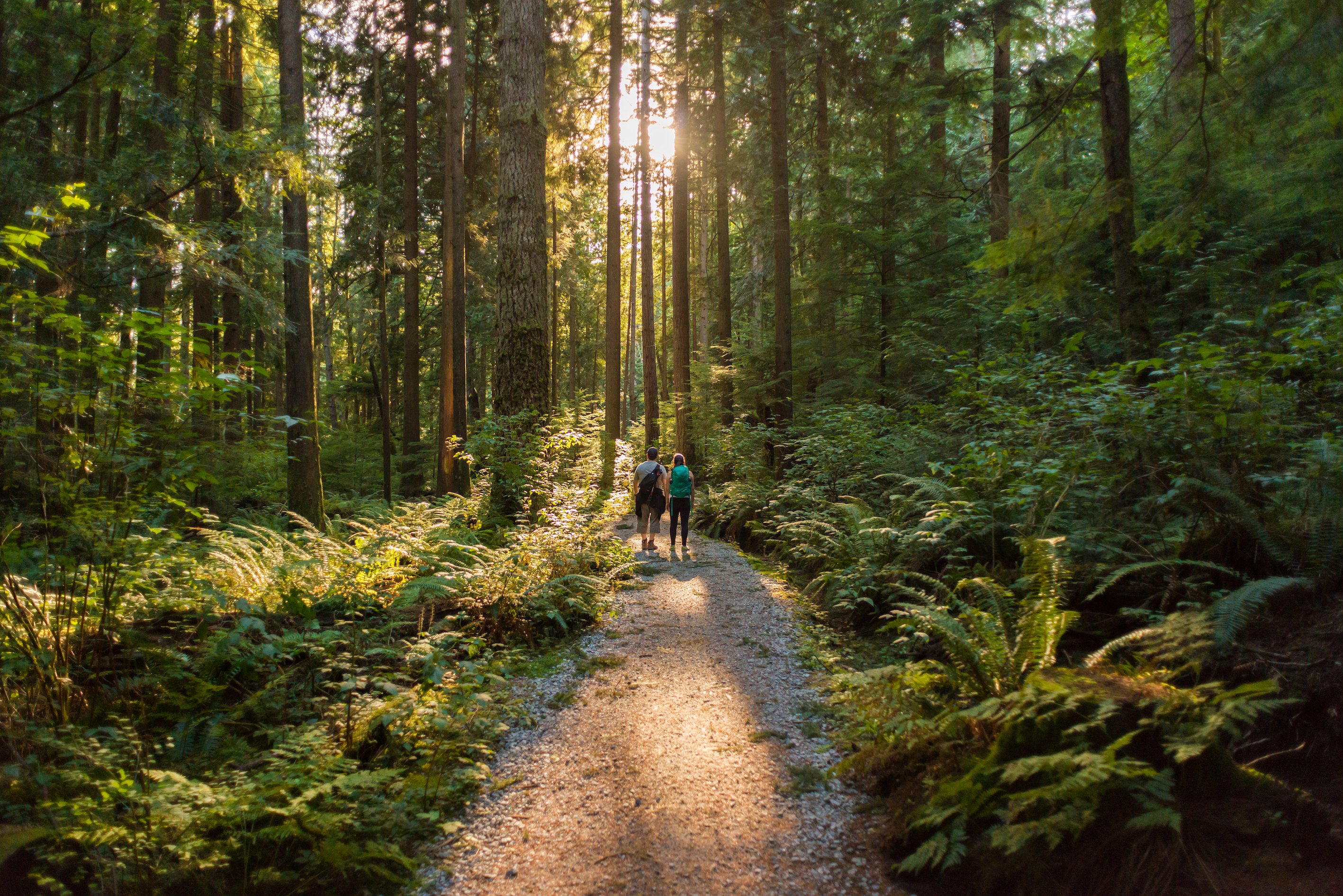 https://highpointeliving.ca/wp-content/uploads/2019/08/Nearby-forests-and-trails-iStock-892002220-copy.jpg